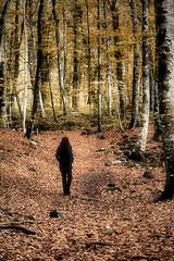 a walk into the wood (Ferran.) Tags: wood people woman nature way dar natura catalonia catalunya garrotxa bosc ripolles esq fageda camins fagedadenjord