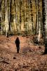 a walk into the wood (Ferran.) Tags: wood people woman nature way dar natura catalonia catalunya garrotxa bosc ripolles esq fageda camins fagedadenjordà