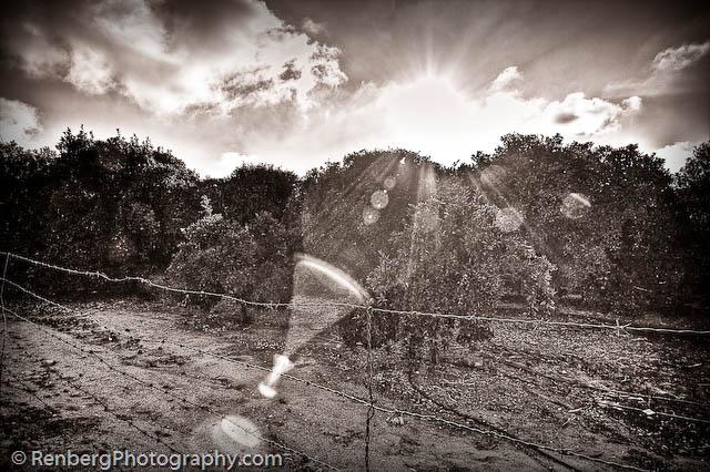 RenbergPhoto 10-16-09 Orange Groves -1