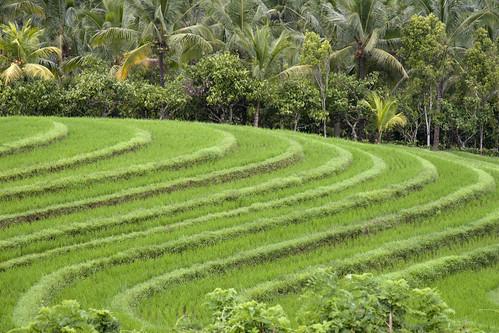 Beautiful Bali - view large