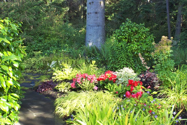 stone path with colorful begonia flowers