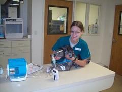 Nebulizing a great dane puppy with pneumonia (Olathe Animal Hospital in Olathe, KS) Tags: pets vet greatdane surgery veterinary pneumonia nebulization vettech veterinarystaff olatheanimalhospital