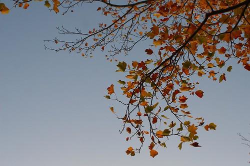 Fall-esque.