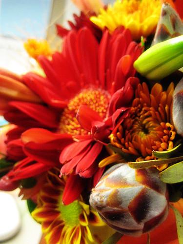 laura flora.
