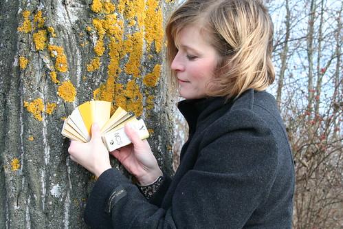 Jag mäter in gul lav på trädstammen med NCS blocket.