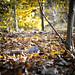 Ground Squirrel  - T.P. Woods