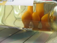 Kumquats through wine bottle