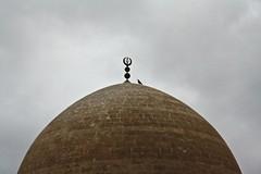 Damdaki kemaneci / Fiddler on the roof (vinyl n' shellac) Tags: landscape gray mosque cami mardin mesopotamia kuş kubbe gri alem