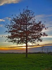 A rvore do Outono - The Autumn Tree 2009 (Conquilha) Tags: autumn sunset tree portugal sunshine evening europa europe olympus porto rvore 2009 outono oporto anoitecer  valongo  conquilha  portugallo      portugaliya