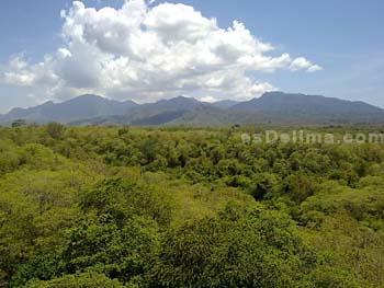 View dari Menjangan Resort