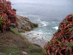 (Trefoil) Tags: ocean california plant beach water rock stone pacific wave shore pacificgrove