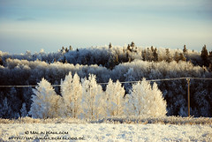 Winter / Vinter (Malinasky) Tags: christmas winter white snow tree beautiful forest landscape early vinter scenery afternoon sweden snowy skog sverige everything jul sn trd landskap arboga vit vacker tidig snig eftermiddag everythingscenery