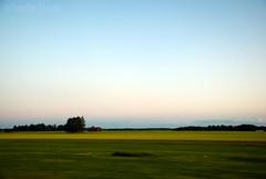 Driving on a summer night (-Camilla) Tags: summer sky tree field barn landscape evening countryside driving sweden farmland motionblur rapeseed nikond80 nikkor18135mm powmerantusenord yhidvegi