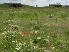 Longues-sur-Mer Gun Battery (D  a  v  e) Tags: pictures camera dave digital computer photography photo pix view image photos pics images photographs photograph views directions info jpg jpeg information facts jpgs jpegs picsof picturesof imageof photographof sumpner imagesof photographsof directionsto