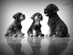 MOTHERHOOD (sanJIBS) Tags: reflection art dogs kids children blackwhite puppies mother bitch motherhood synthetic canona550 platinumheartaward sanjibs platinumpeaceaward sanjibdey