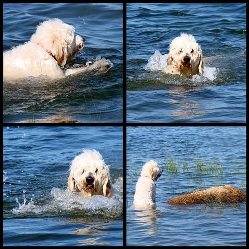 swimming fool