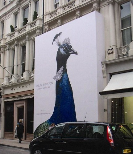 Outdoor -  Retail - Peacock