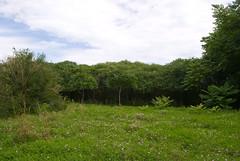 DSC_0032 (kleptobob) Tags: park mississauga floraandfauna erindale