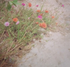 (Syka Lê Vy) Tags: flowers green film 35mm small vietnam vy dreamer 2009 sleepwalker kodakfilm lê canonql17 canonql17giii syka vắng balladofbignothing fromsykawithlove sykalevy lehoangvy sundayspirit