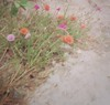 (Syka Lê Vy) Tags: flowers green film 35mm small vietnam vy dreamer 2009 sleepwalker kodakfilm lê canonql17 canonql17giii syka vắng balladofbignothing fromsykawithlove sykalevy lehoangvy sundayspirit