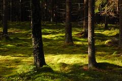 SE 475 (Username Exists) Tags: forest moss sweden nykping srmlandsleden