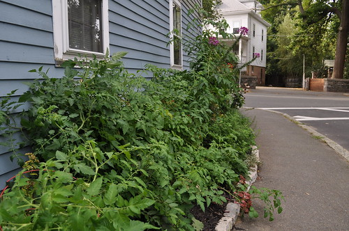 Garden In Early September: Tomatoes Took Over!