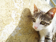 (Gabriel Junior) Tags: brasil cat gato felino sonyw110