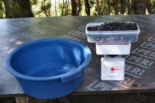 05-Pesagem dos frutos colhidos por um participante