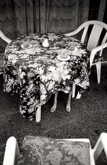 A surprise on sunday (MEDIAVITA) Tags: dog animal analog table blackwhite chair negative silla tenerife analogue tmax400 35 sorpresa escondido misterious analogic privat minox35 minitar1 35mmroll