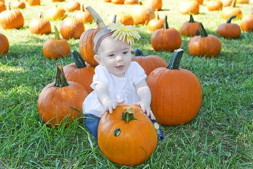 Pumpkin113