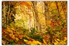 Fall Colors (alemdag) Tags: tree green yellow forest turkey nikon bravo türkiye turkiye artvin soe mehmet sarı d300 ağaç sanat orman blacklake fotoğraf renkler alemdağ alemdag flickrsbest abigfave karagöl colorphotoaward infinestyle fbdg nikond300 mehmetalemdağ alemdagqualityonlyclub vosplusbellesphotos