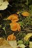Bright Orange Fungi!