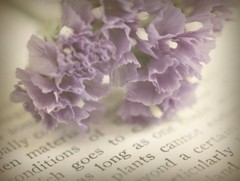 Petals of Crepe (luvpublishing) Tags: flowers texture nature floral purple lavender overlay romantic picnik purpleflowers oldbook layered oldtext softdreamyandethereal