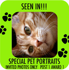COMMENT CODE SPECIAL PET PORTRAITS