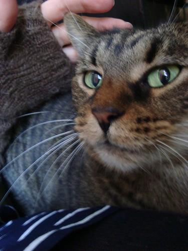 10-18 cat face