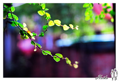 WAN_9583_1024 (Hankwan ) Tags: