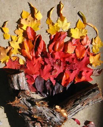 My Fall campfire 4