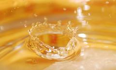 Water Drop (Nas t) Tags: macro water drops nikon 90mm d60