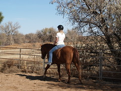 E riding Dunny, bareback (lostinfog) Tags: november 2009 dunny colorado e300 horse riding