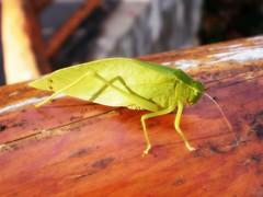 cropped bug