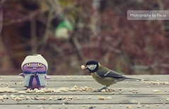 Babo Feeding Bird (20/30) (Morphicx) Tags: pink blur bird dutch actionfigure fly flying wings purple feeding action bokeh wing vinyl seed ish ugly 5d uglydoll greattit uglydolls babo 30days 70200f4 ilovebokeh bokehwhores bokehwhore uglydollsunite uglydollunite