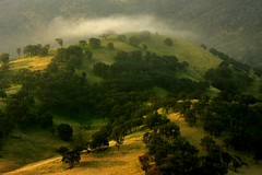 cloud covering top of a hill at round valley (Marc Crumpler (Ilikethenight)) Tags: california morning autumn trees usa green grass fog clouds canon landscape hiking trails hills bayarea eastbay ebrpd roundvalley contracostacounty eastbayregionalparkdistrict canon70300isusm 40d ebparks canon40d