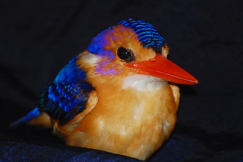 African Kingfisher African Pygmy-kingfisher
