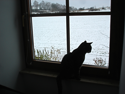 schnurrli watching the snowflakes