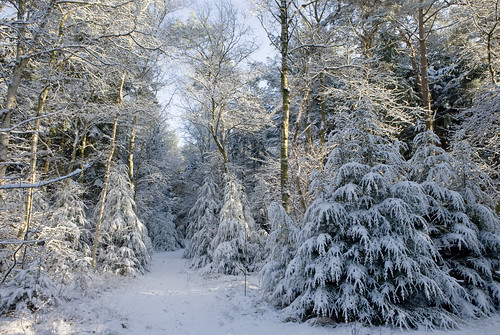 sneeuwbos