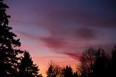 Cirrus and Sunset (absencesix) Tags: sunset sky usa nature weather clouds landscape washington december unitedstates dusk iso400 noflash redmond northamerica 2009 ef2470mmf28lusm locations microsoftcampus manualmode 68mm timeofday redwestcampus camera:make=canon geo:state=washington exif:make=canon exif:iso_speed=400 exif:focal_length=68mm geo:city=redmond canoneos7d canon7d redwestc hascameratype selfrating2stars december112009 1100secatf40 microsoftnorthcampus geo:countrys=usa exif:lens=ef2470mmf28lusm camera:model=canoneos7d exif:model=canoneos7d exif:aperture=40 subjectdistanceunknown redmondwashingtonusa geo:lon=12214113182391 geo:lat=47657372708027 473927n122828w