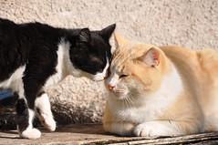 Giacomino&Ciccio (mkarco) Tags: italy parco nature cat gatto dei paesaggio ciccio monti nazionale sibillini montisibillini giacomino