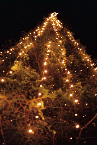 City square tree with lights