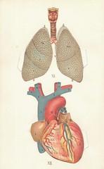 atlas anatomie 12