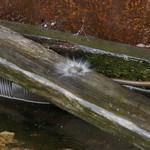 Splash!! thumbnail